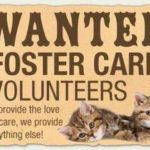 Wanted: Foster care volunteers graphic.