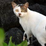Feral cat photo