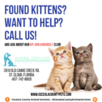Kit and Kaboodle Club flyer featuring two kittens.