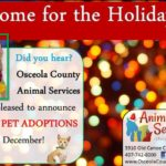 Home for the holidays flyer.