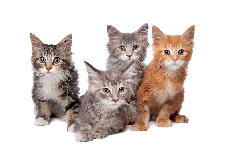 Photo of four kittens
