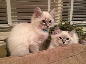 Photo of two kittens on a couch.