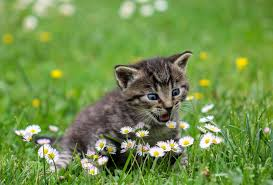 Photo of a kitten on the grass