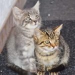 Photo of two kittens