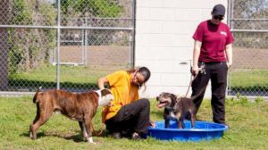 Photo of dogs playing in kiddie pool