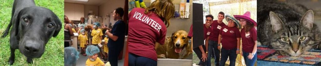 Collage photo of volunteers and adoptable pets in action.