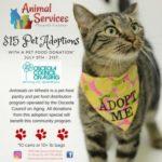 Adoption special flyer - $15.00 adoptions