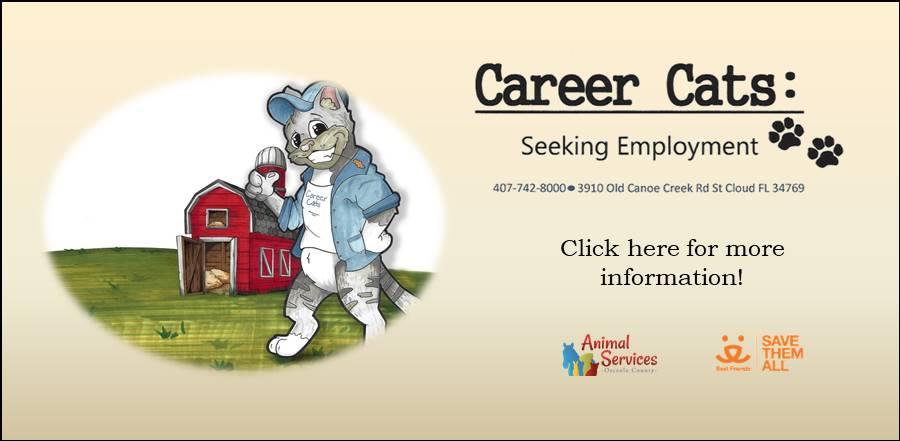 Career Cats Seeking Employment slide and link