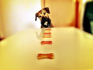 Dog looking at treats on a counter.