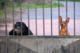 2 dogs looking through a gate