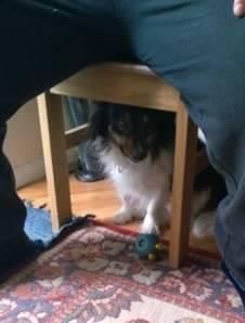 dog under chair