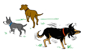 3 dogs playing graphic