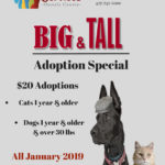 Big and Tall adoption special flyer