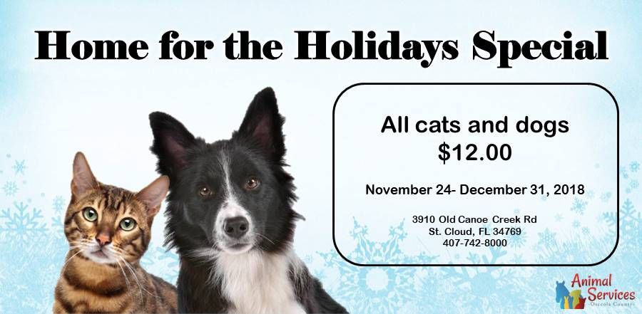 Slider - all cats and dogs $20 through 12/18
