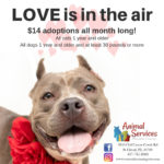February 2019 Special Flyer $14 for cats over 1 year and dogs over 1 year and over 30lbs