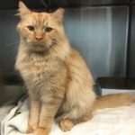 Garfield an adopted Community Cat