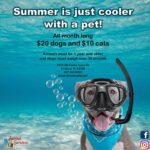Summer 2019 Adoption special flyer
