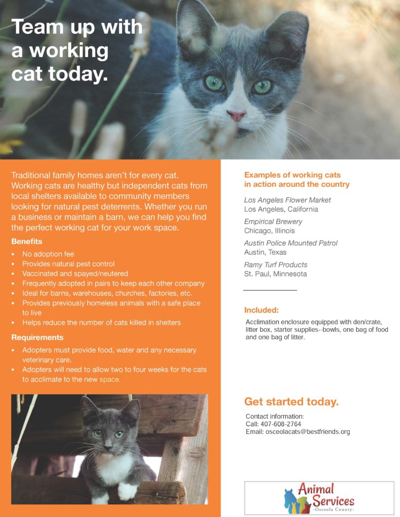 Team up with a working cat flyer.