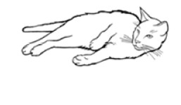 Illustration of a relaxed cat