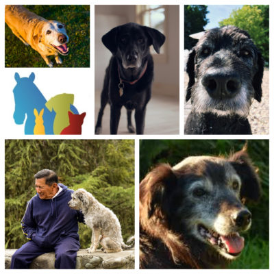 Older dogs collage