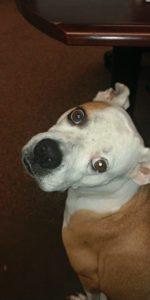 Dog - Fiona