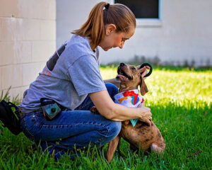 Small dog with volunteer