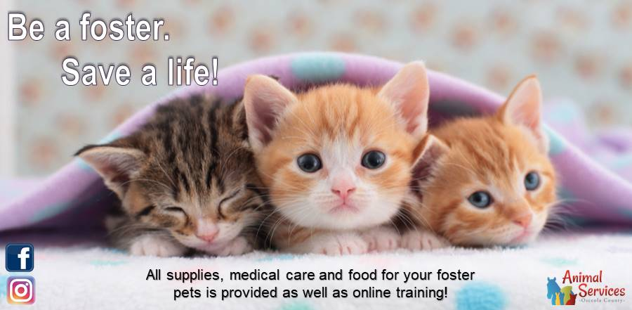 be a foster - save a life slider and link