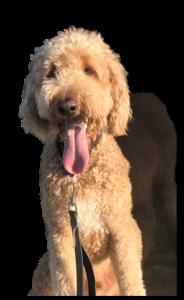 Sheriff's canine Murphy