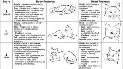 Cat Stress Scale levels 1-3