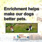 Dog enrichment poster and artwork