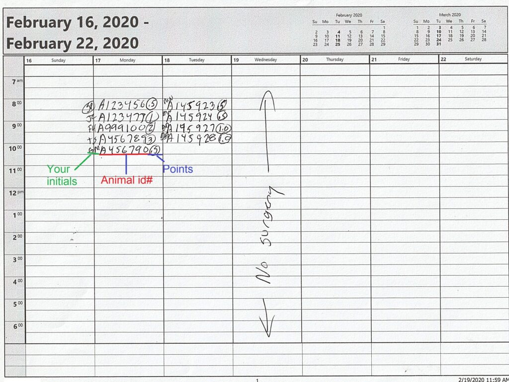 Surgery schedule calendar.