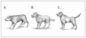 3 dog choices to walk