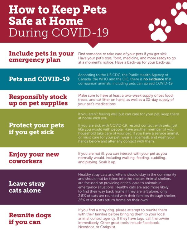How to keep pets safe at home during Covid 19 flyer