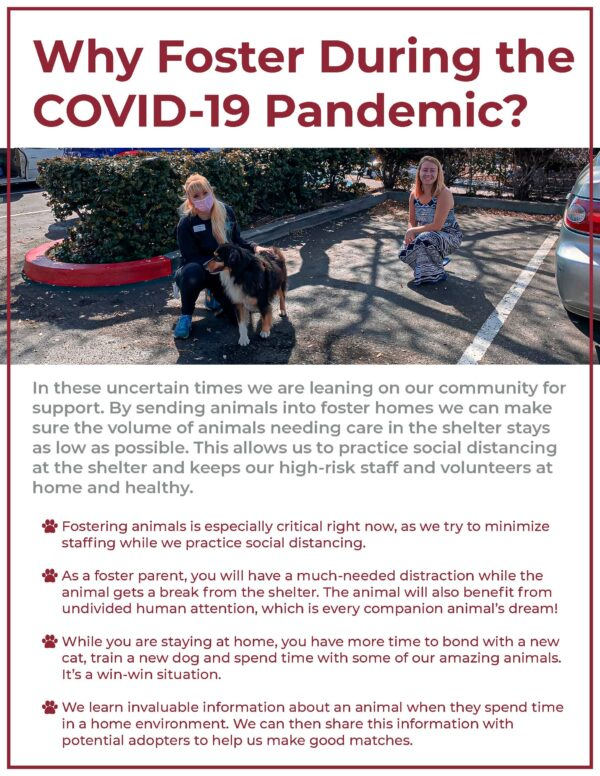 Why you should foster during COVID-19 flyer