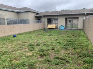 Dog play yard - yard with bench