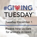Giving Tuesday 2020 poster