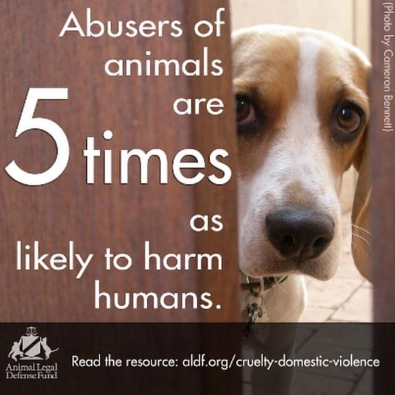 Animal abuse/neglect poster