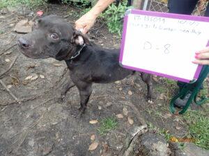 Dog abuse case file photo - black dog
