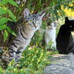 Feral cats in Osceola County