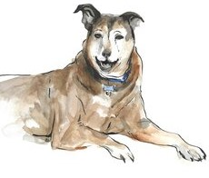 Hershey, a large dog; drawing by Rachel