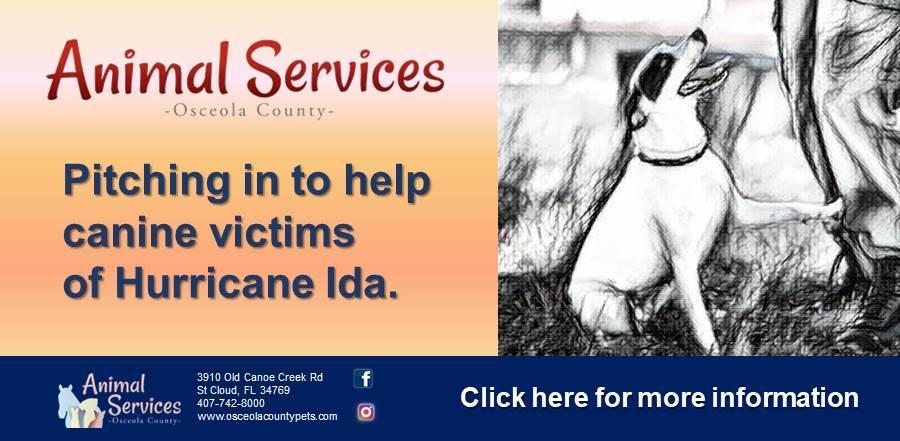 Ida help dogs slider and link