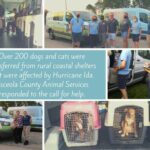 Rescued pets from Hurricane Ida collage